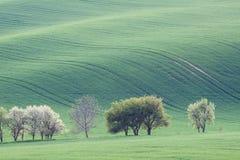 Grüne Ackerlandlandschaft der Landschaft Stockfotos