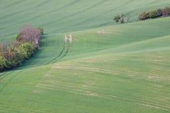 Grüne Ackerlandlandschaft der Landschaft Lizenzfreies Stockfoto
