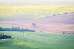 Grüne Ackerlandlandschaft der Landschaft Stockfotografie