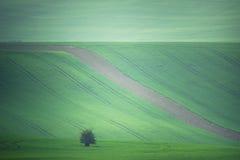 Grüne Ackerlandlandschaft der Landschaft Lizenzfreie Stockbilder