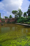 Grüne Algen deckten Teich ab lizenzfreies stockbild