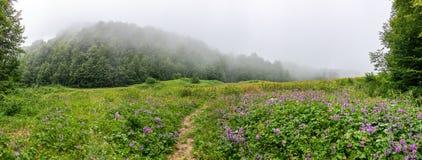 Grüne Alpenwiese mit Blumen und Spur und Wald im dichten Nebel stockfotografie