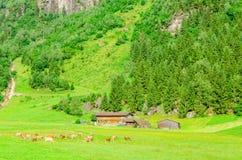 Grüne Alpenwiesen, Zillertal, Österreich Stockfoto