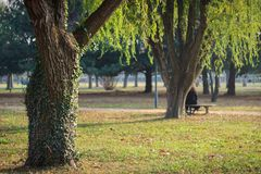 Grüne alte Bäume im Gartenhintergrund Lizenzfreie Stockfotografie