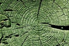 grüne alte Baumschnittbeschaffenheit Lizenzfreie Stockbilder