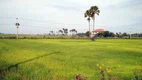 Grüne Ansicht von Paddy Field Stockfotos