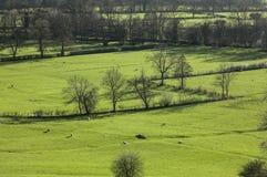 Grüne Ansicht - Wiesen, Höchstbezirk, England, Großbritannien lizenzfreie stockbilder