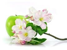 Grüne Apfelfrucht getrennt mit rosafarbenen Blumen Stockbild