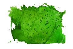 Grüne Aquarellstelle stockbilder