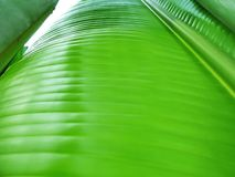 Grüne Architektur Stockfotografie