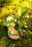 Grüne Art und Weise der Natur. lizenzfreie stockfotografie