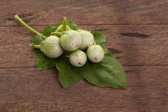 Grüne Aubergine mit Wassertropfen und Aubergine verlässt auf hölzernem Stockfotos