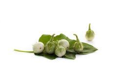 Grüne Aubergine mit Wassertropfen und Aubergine verlässt auf Weiß Stockfotografie