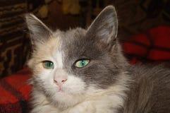 Grüne Augen Stockbild
