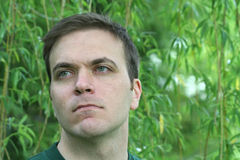 Grüne Augen Lizenzfreie Stockbilder