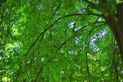Grüne Bäume Stockfotos