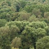 Grüne Bäume Lizenzfreie Stockfotos
