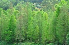 Grüne Bäume auf Hügel Stockbild