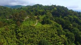 Grüne Bäume, die üppig auf Hügeln mit Straßenlauf unter, Batumi Georgia wachsen stock footage