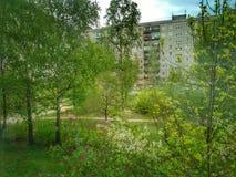 Grüne Bäume draußen lizenzfreies stockfoto