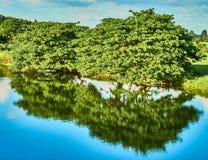 Grüne Bäume durch den Fluss Stockfoto