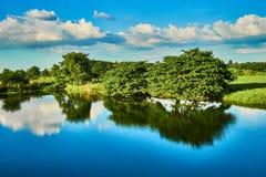 Grüne Bäume durch den Fluss Stockfotografie