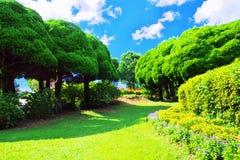 Grüne Bäume gegen blauen Himmel mit Wolken Stockbilder