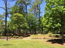 Grüne Bäume gegen den blauen Himmel lizenzfreies stockbild