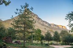Grüne Bäume gegen den Hintergrund des Hügels Stockfotografie