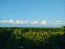 grüne Bäume, Himmel in der Tageszeit stockfoto