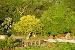 Grüne Bäume im Ackerland Stockbild