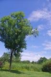 Grüne Bäume im Park Stockfoto