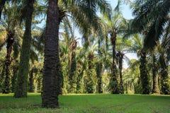 Grüne Bäume im Park Lizenzfreie Stockfotos