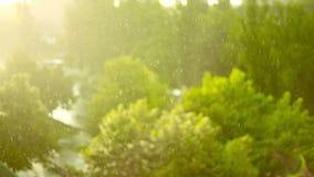 grüne Bäume im Regen stock video footage