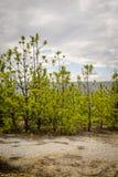 Grüne Bäume im trockenen Land Stockfotografie