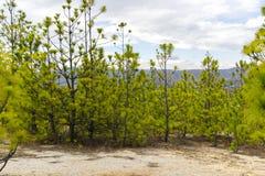 Grüne Bäume im trockenen Land Lizenzfreie Stockbilder