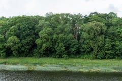 Grüne Bäume nahe dem Fluss Stockbild
