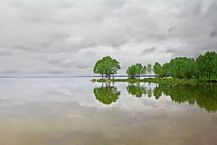 Grüne Bäume reflektiert im See Stockfotografie