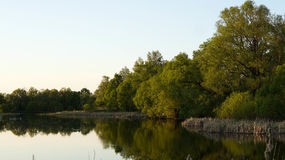 Grüne Bäume und Büsche auf der Flussbank Stockbild