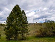 Grüne Bäume und Büsche auf einem Berg mit bewölktem Himmel und Freileitungsmasten stockfotos