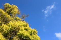 Grüne Bäume und blauer Himmel lizenzfreies stockbild