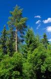 Grüne Bäume und blauer Himmel Stockbild