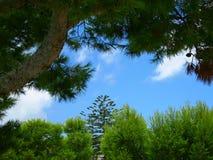 Grüne Bäume und blauer Himmel Stockfotografie