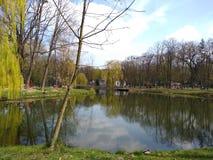 Gr?ne B?ume und blauer Himmel im Stadtpark Ivano-Frankivsk, Ukraine Fr?her Fr?hling lizenzfreie stockfotografie