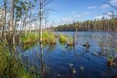 Grüne Bäume und Gras in Wasser mit Reflexion Sunny Landscape lizenzfreie stockbilder