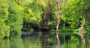 Grüne Bäume und See Lizenzfreie Stockbilder