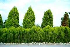 Grüne Bäume und Sträuche gegen den Himmel stockfotografie