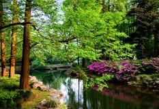 Grüne Bäume und Teich Lizenzfreies Stockbild