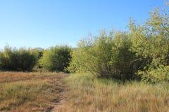 Grüne Büsche auf dem Gebiet Lizenzfreies Stockbild