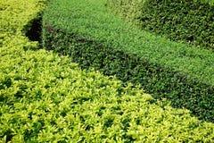 Grüne Büsche in drei Schichten Hintergrund Stockfotografie